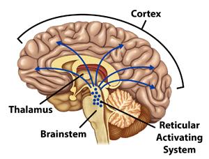 Brain Trauma, Concussion, and Coma: Figure 1