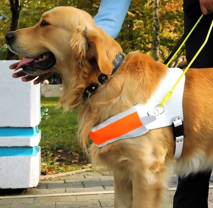 Ask the Expert: What the Disability Laws Say About Service Dogs