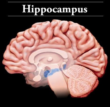 Interactive Brain | BrainLine