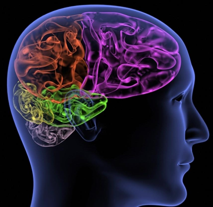Neuroanatomy of Behavior After Brain Injury