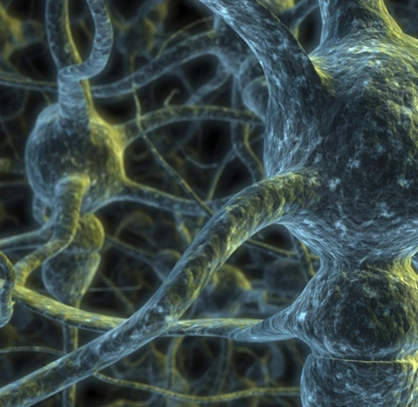 Types of Traumatic Brain Injury | BrainLine