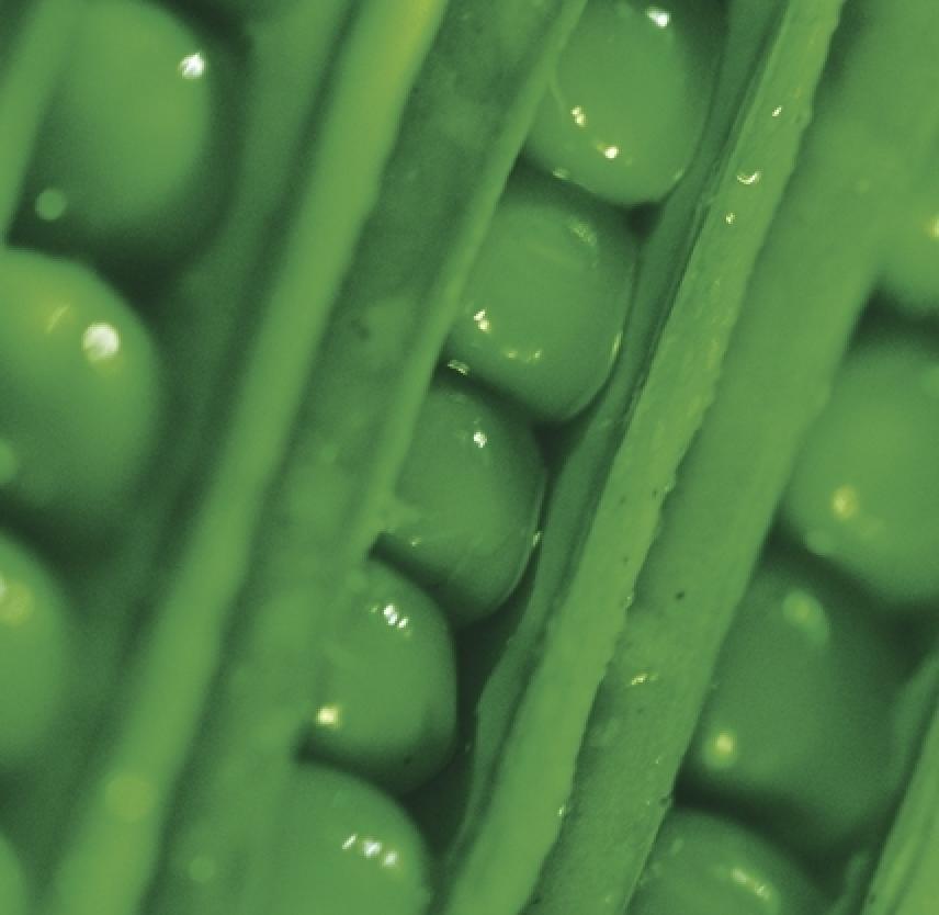 Nourish Your Noggin: Nutrition and Your Brain