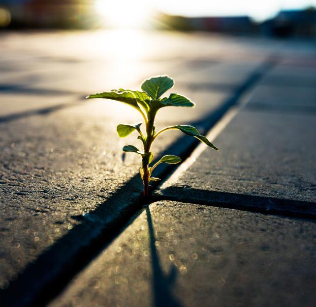 Post-Traumatic Growth: Growth Through Trauma