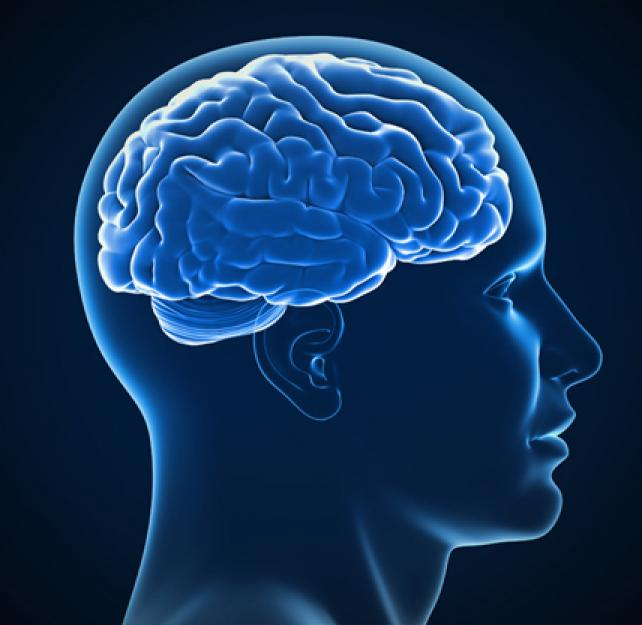 Brain Basics: An Interactive 3D Model of the Injured Brain