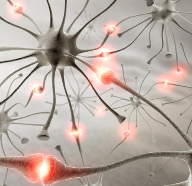 Ask the Expert: What Is Neuroplasticity?