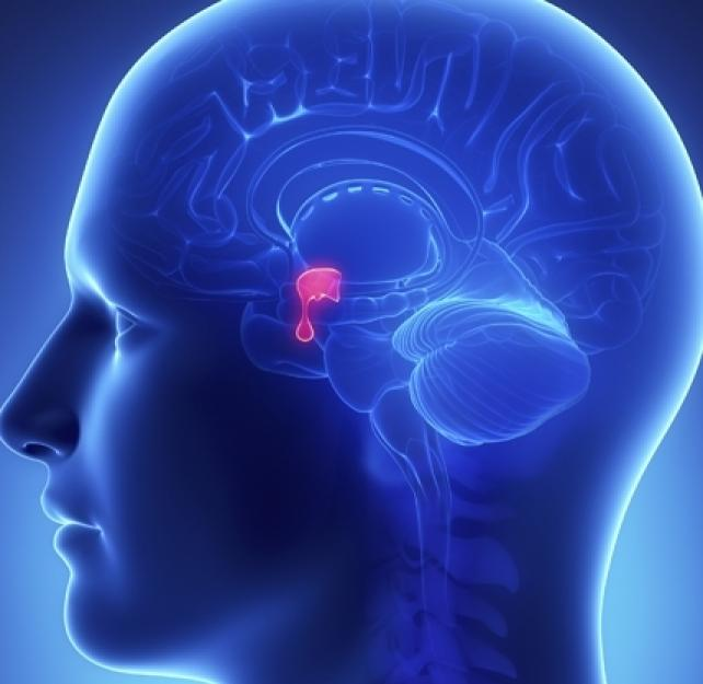 Can Symptoms of Hypopituitarism Present Years After a Brain Injury?