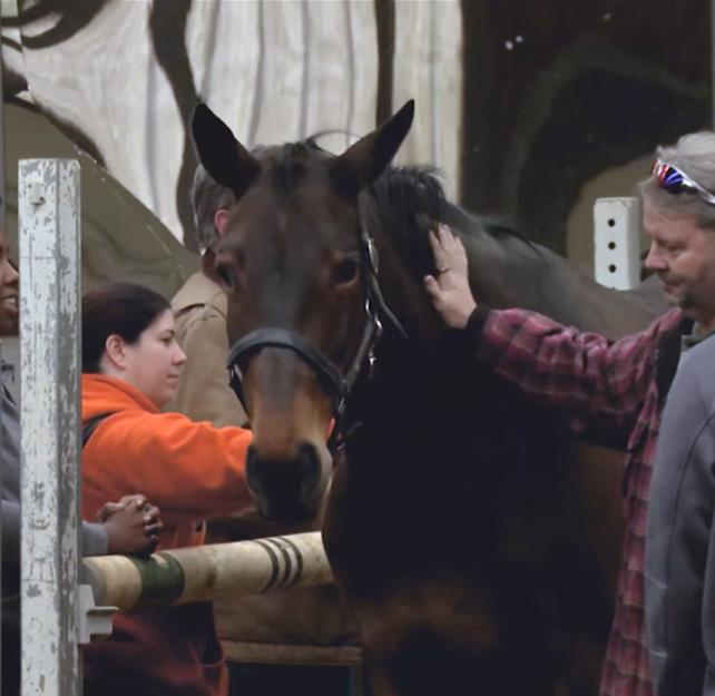 Equine Therapy Being Used to Help Wounded Warriors with TBI & PTSD